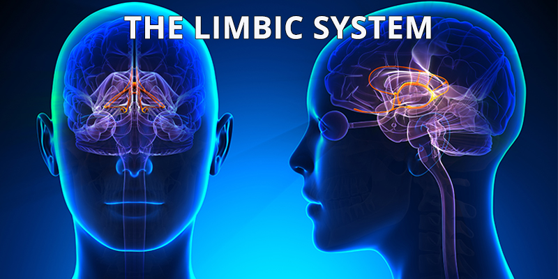 Limbic System: Caring for Your Brain's Limbic System ... Adhd And Limbic System